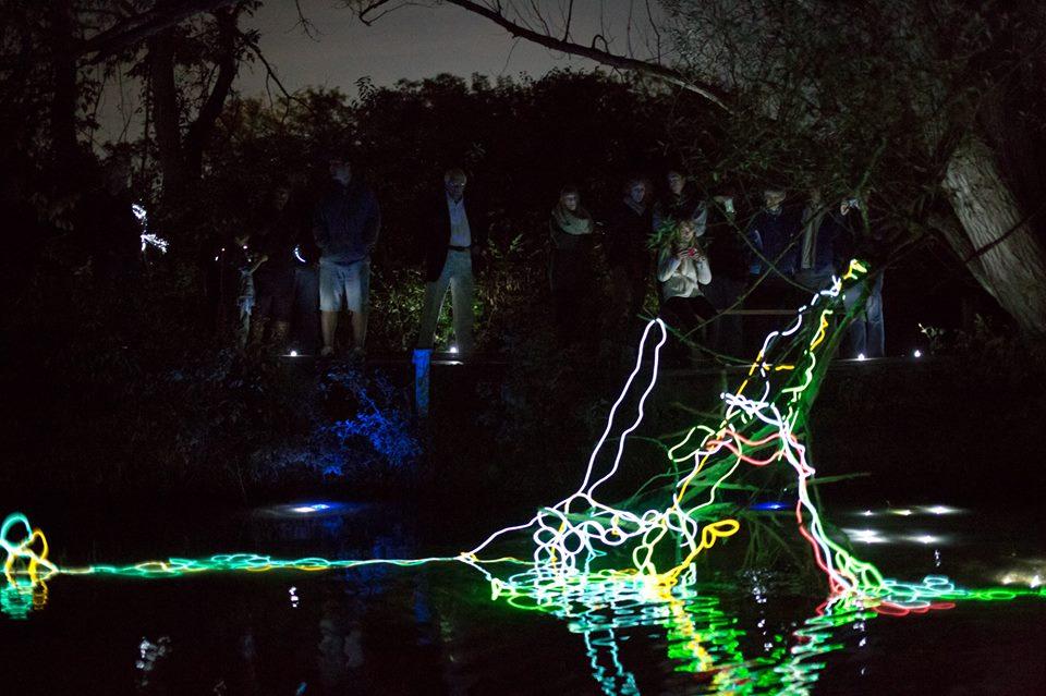Shine a Light: Milbrook Marsh Illuminated